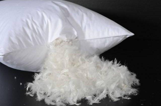 Edredones y almohadas de plumas pueden causar fibrosis pulmonar