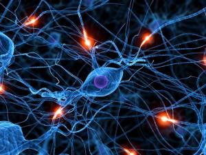 neuronas epilepsia