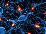 Taller Psicoeducativo 'Epilepsia en la Infancia y la Adolescencia' de ANPE