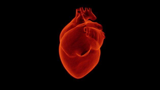 heart_medical_health_cardiology_medicine_hospital_care_doctor-385289